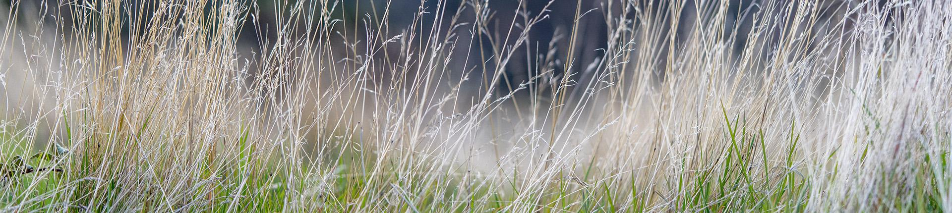 photo herbe champs au printemps