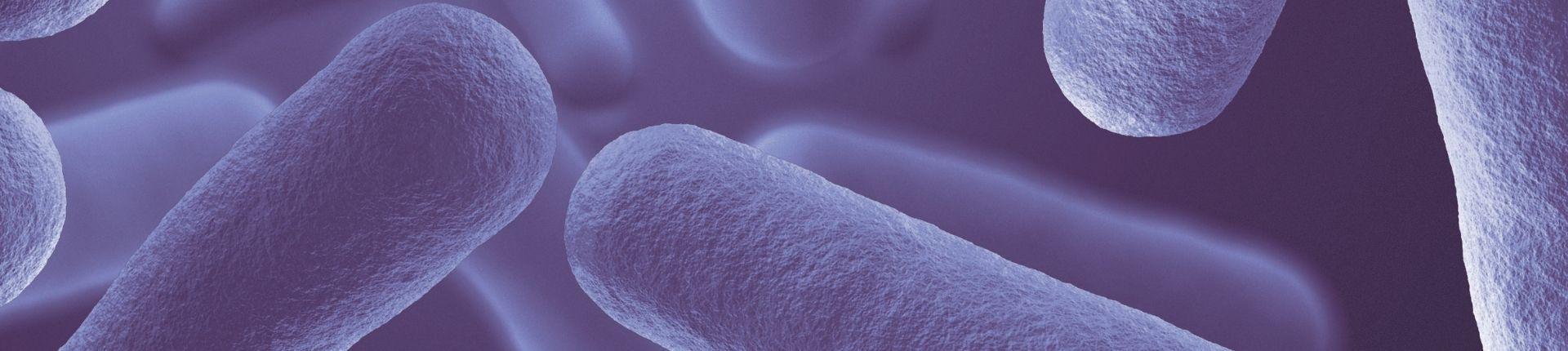 image microbiote