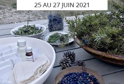 Rando botanique et healthy en cabane dans la forêt de Fontainebleau