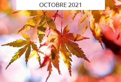 photo feuillage automne